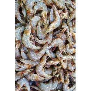 SAMPLE PRODUCT FISH