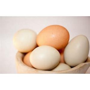 Organic Free Range Eggs per box (6)
