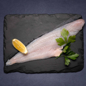 Frozen Haddock (MSC) - Medium