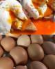 15 Dozen (180) Free Range Dark Yolk Eggs (Medium)