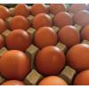 All Game & Eggs Ltd