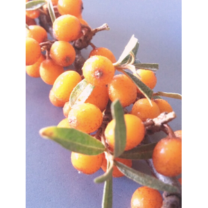 Sea Buckthorn Berries | 40g