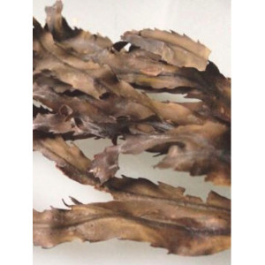 Dried Toothed Wrack | 30g