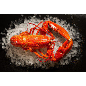 Lobster Whole